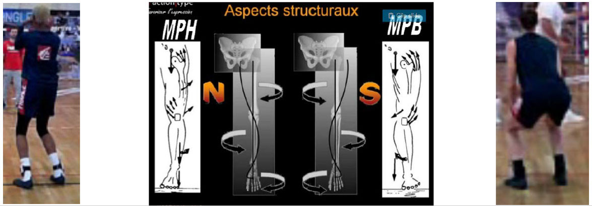 Aspects structuraux