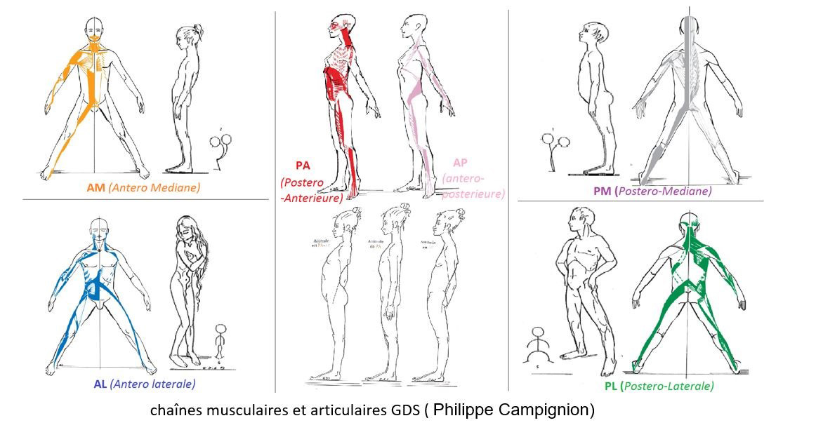 Chaînes musculaires et articulaires GDS (Philippe Campignion)