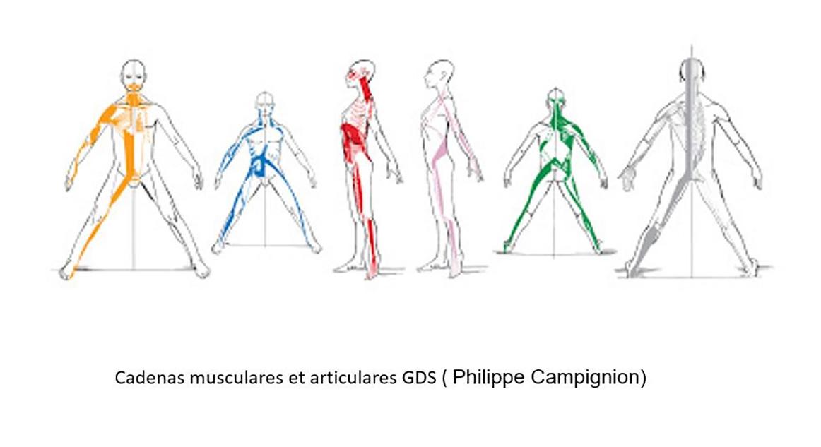 Chaînes musculaires et articulaires GDS (Philippe Campignion)