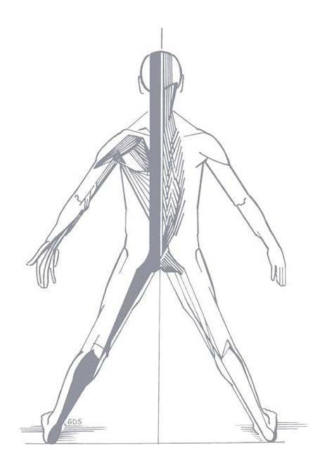 Muscles et tendons les plus sollicités